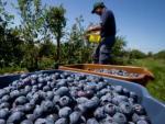 El cambio climático y los aranceles dan jaque mate al fruto símbolo de EEUU