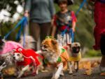 El negocio de las mascotas en Estados Unidos se ha disparado durante la pandemia