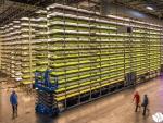 Aerofarms es la empresa pionera en el mundo de los llamados cultivos verticales