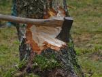 La política económica de talar árboles para recoger la fruta.