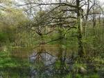 Bosque de Orgi, Navarra