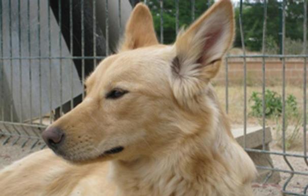El Centro de Protección Animal logra 106 adopciones de perros y gatos en el ultimo año