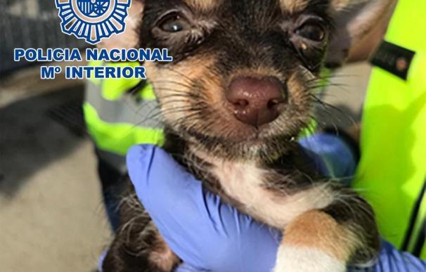 El pasado fin de semana desmantelaron un criadero ilegal de perros y rescatados 17 cachorros
