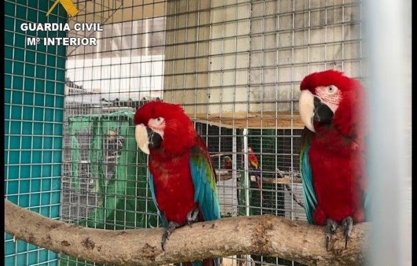 La Guardia Civil detiene e investiga a 23 integrantes de una red delictiva dedicada al comercio ilegal de especies protegidas