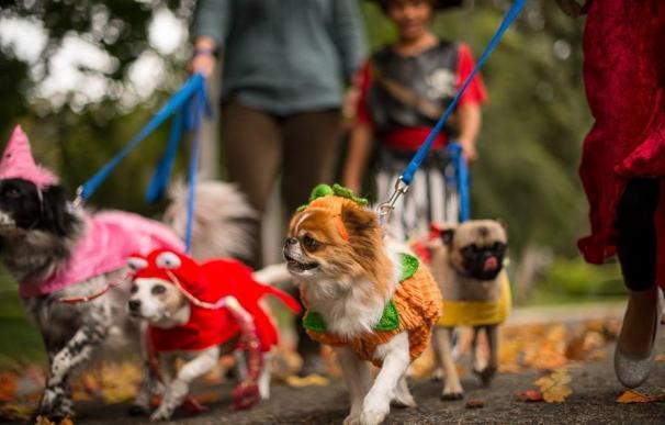 El negocio de las mascotas en Estados Unidos se ha disparado durante la pandemia.
