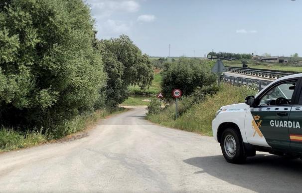 Dispositivo de la Guardia Civil en Gerena (Sevilla) que busca un toro escapado desde esta mañana.