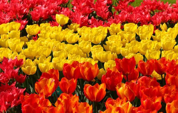 España-en-flores1