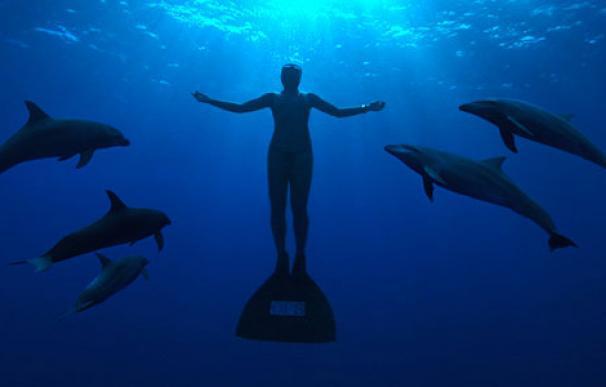 delfines1