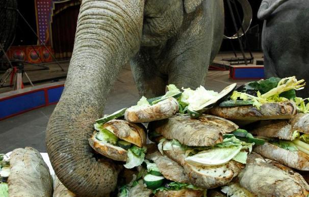 Grandes chefs se esmeran en preparar un desayuno para tres elefantas