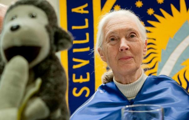 """Jane Goodall dice que """"al salvar el lince salvamos también nuestro propio ecosistema"""""""
