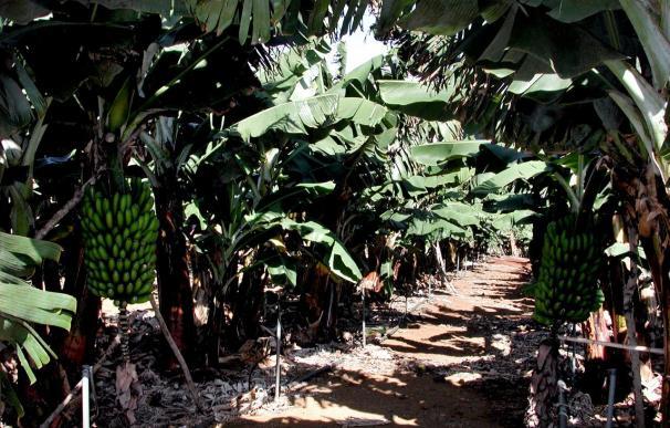La UE y los países latinoamericanos rubrican un acuerdo sobre los aranceles al banano