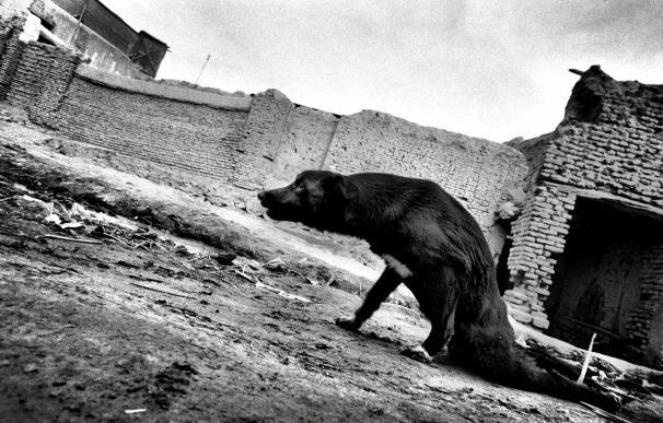 """Un fotógrafo italiano gana el """"Luis Valtueña"""" por su trabajo sobre Afganistán"""