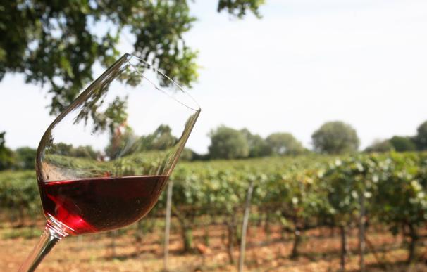 La producción de vino balear aumenta un 10% en 2016 y la uva bate el récord de 2005 con más de 9.000 toneladas