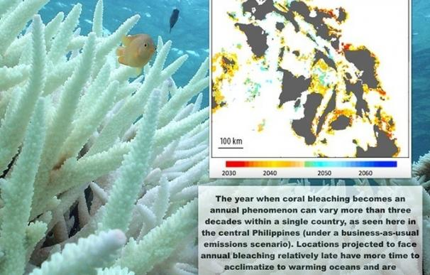 El blanqueamiento del coral será total si no se reducen las emisiones