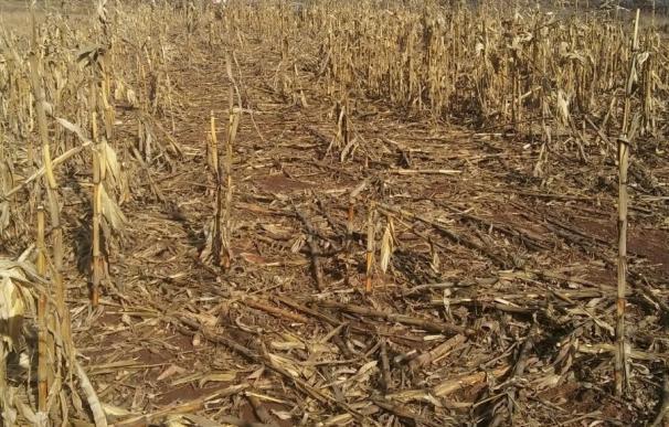 UAGA exige medidas contra los daños por fauna en cultivos