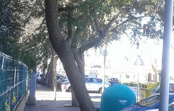 Cort intensifica las inspecciones de árboles para prevenir caídas por el temporal