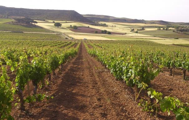 Autorizadas 500 hectáreas de nuevas plantaciones de viñedo en Ribera y 68 en Rueda