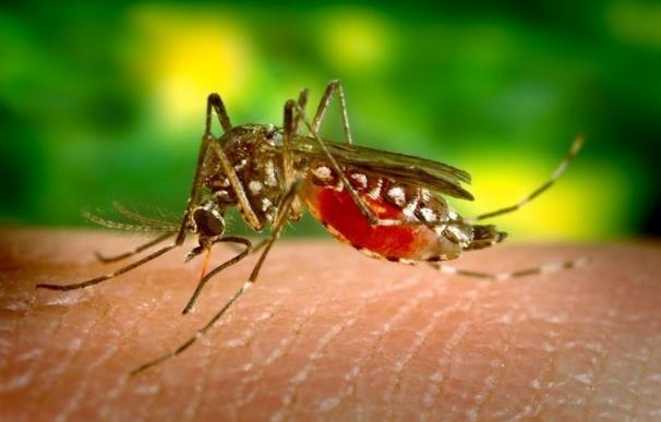 El virus Zika puede vivir durante horas en superficies duras y no porosas