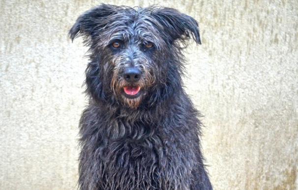 AUPA y Bioparc preparan un nuevo desfile solidario de perros abandonados para animar a la adopción en Navidad