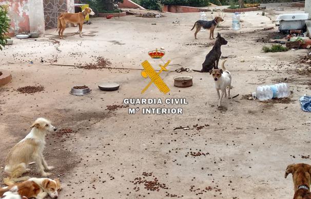 Detenido por tener cadáveres de perros y otros vivos pero desnutridos en su finca en Estepona