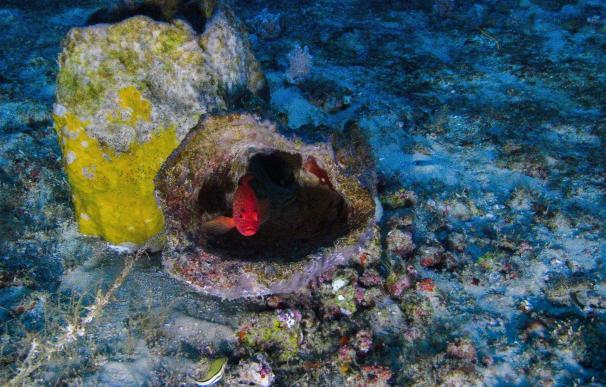 Greenpeace fotografía por primera vez un coral único descubierto en el Amazonas y que está amenazado por prospecciones