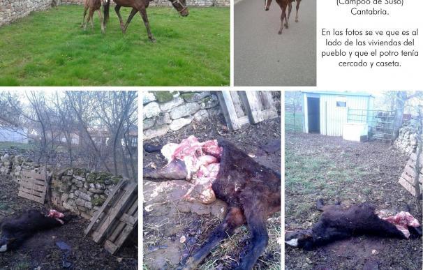 Asaja reclama celeridad en las batidas de lobo que solicitan los ayuntamientos al Gobierno de Cantabria