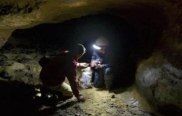 Científicos logran hallar ADN de neanderthal en cuevas sin huesos