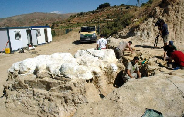 Expertos en la Era de los Dinosaurios debatirán en Teruel los últimos hallazgos