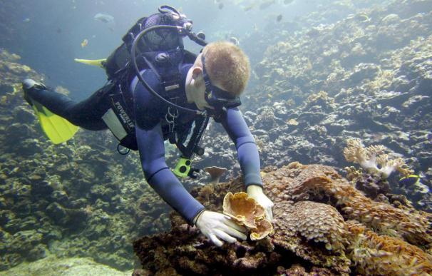 Una expedición de Oceana halla especies desconocidas en aguas de Canarias