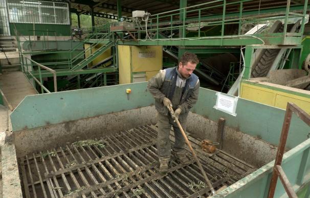 La Junta pone líneas de financiación para que la industria pueda comprar aceituna