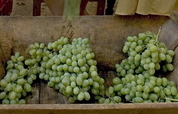 Unos 200 viticultores exigen en una concentración 0,75 euros por el kilo de la uva de 2009