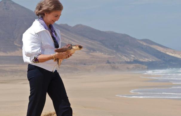 La Reina visita la isla de Lobos y suelta tortugas en el sur de Fuerteventura