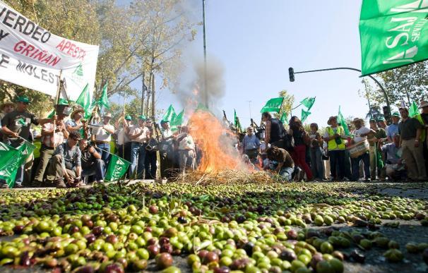 Agricultores protestan en Sevilla por la situación de la aceituna de mesa
