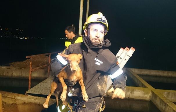 Rescatan a un perro que había quedado atrapado en una tubería en Petrer (Valencia)