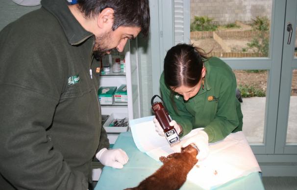 Más de mil animales atendidos al año en el Centro de Recuperación de La Alfranca
