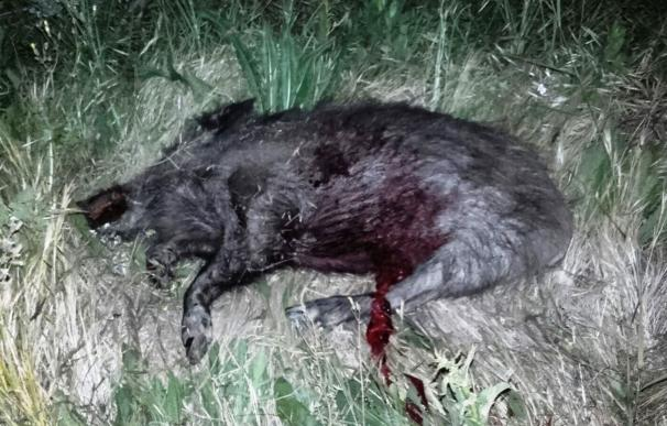 Policía Foral atiende seis accidentes por atropellos a animales