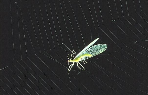 Insecto atrapado en una telaraña