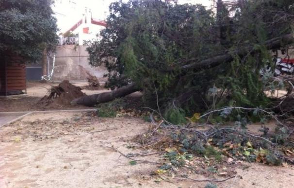 El Gobierno destina 5,4 millones para reparar daños por el temporal en costa mediterránea, Tenerife y Lanzarote