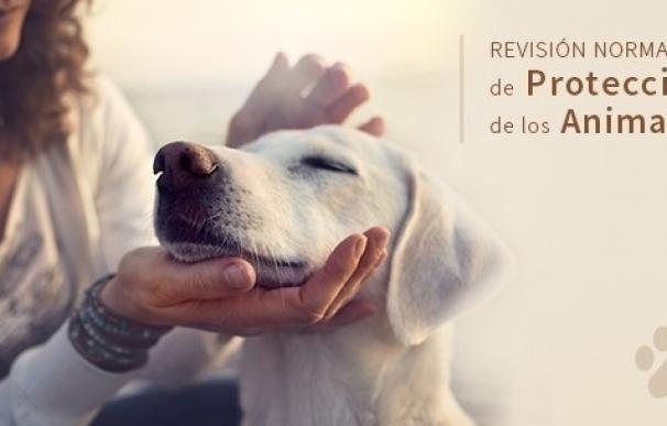 La Ley de Protección de Animales de Canarias recibe más de 200 aportaciones en el periodo de consulta pública