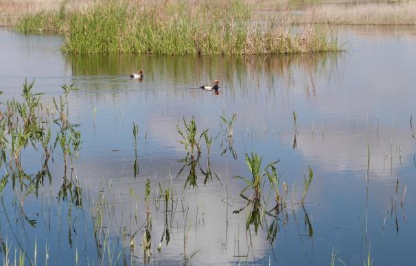 Las aguas de Las Tablas de Daimiel no tienen valores contaminantes que superen los umbrales de referencia, según IGME