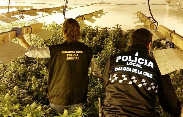 Detenido un individuo con casi 500 plantas de marihuana en un invernadero de Caravaca de la Cruz