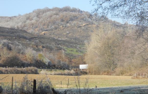 Convocadas subvenciones por 500.000 euros para aprovechamiento sostenible de los montes de Cantabria