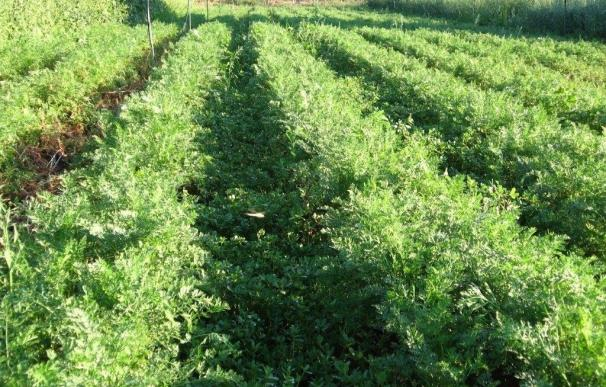 La Junta de Andalucía participa en la regulación de fertilizantes y fitosanitarios permitidos en producción ecológica