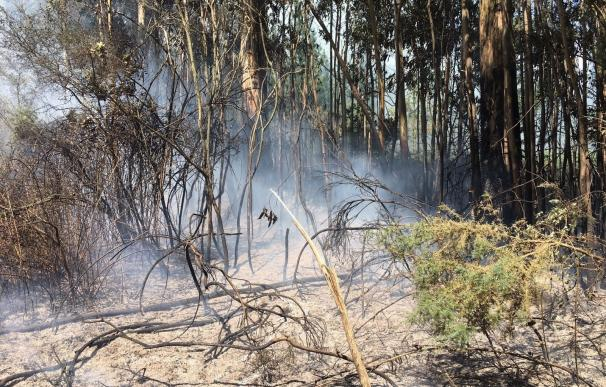 Detenido un hombre acusado de 28 incendios forestales en las localidades de Mesía y Frades (A Coruña)