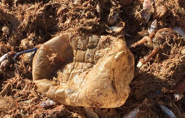 """Equo exige medidas """"urgentes"""" para reducir la contaminación por plásticos en las playas españolas"""