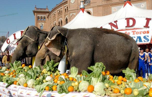 Herida grave por un elefante la domadora del Gran Circo Mundial en Madrid