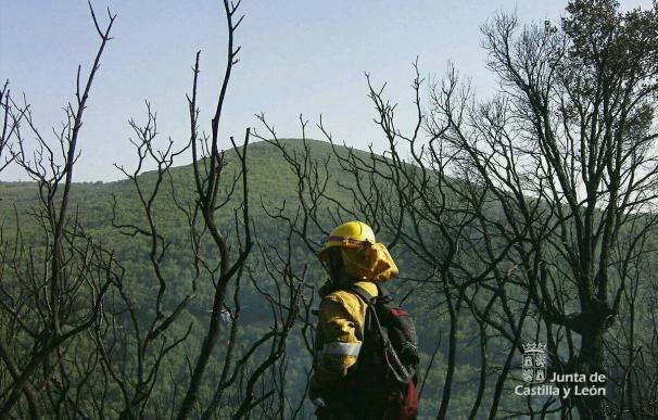 Controlado el incendio de Navarredonda y que ha arrasado 500 hectáreas
