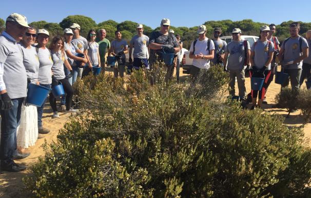 Una recogida de semillas, primera actividad de voluntariado para la restauración del incendio de Moguer