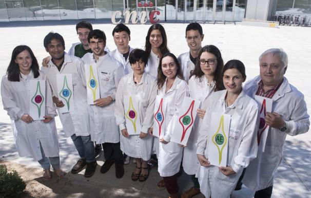 Investigadores del CNIC desarrollan nuevos métodos para analizar la función de los genes
