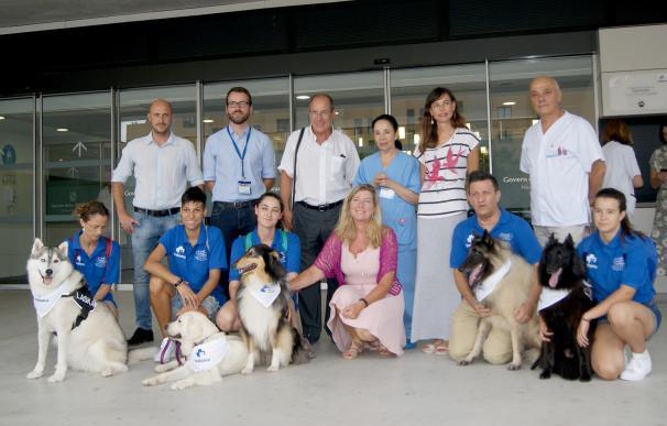 Presentan Dogspital, el proyecto para que pacientes ingresados reciban la visita de su perro